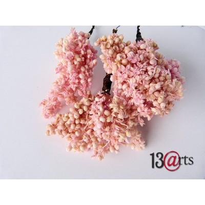 13 Arts - fleur séchées couleur Corail