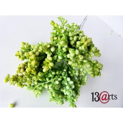 13 Arts - fleur séchées couleur Vert