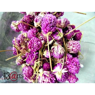 13 Arts - Trèfle séché couleur Rose 25g
