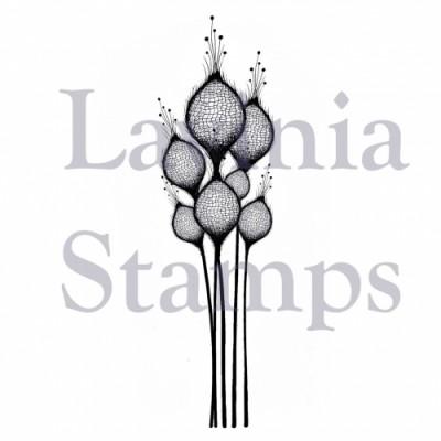 Lavinia - Estampe «Fairy Thistles»