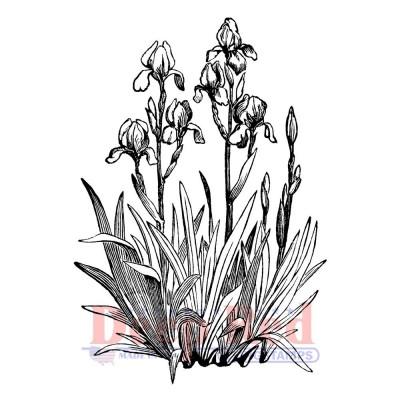 "Deep Red - Estampe «Iris In Bloom» 2.2""X3"""