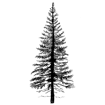 Lavinia - Estampe «Fir Tree 1»